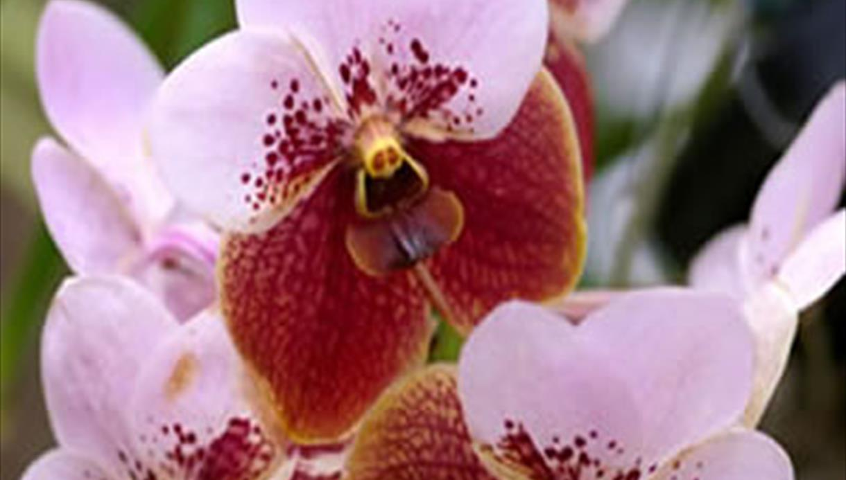 The Southport International Orchid Show